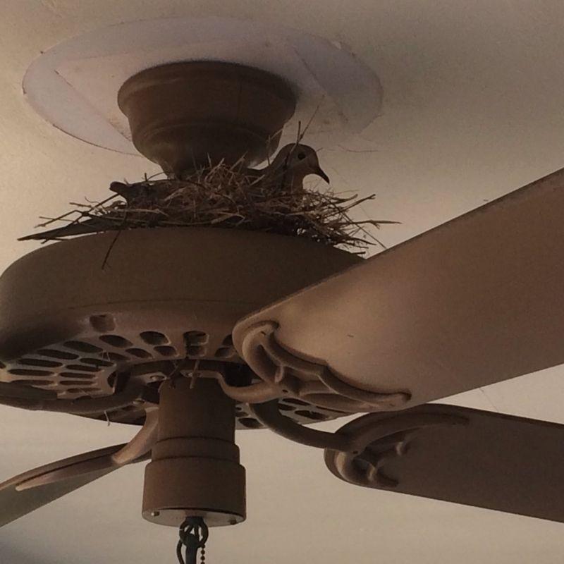 Unusual 6 Wing Hunter Ceiling Fan